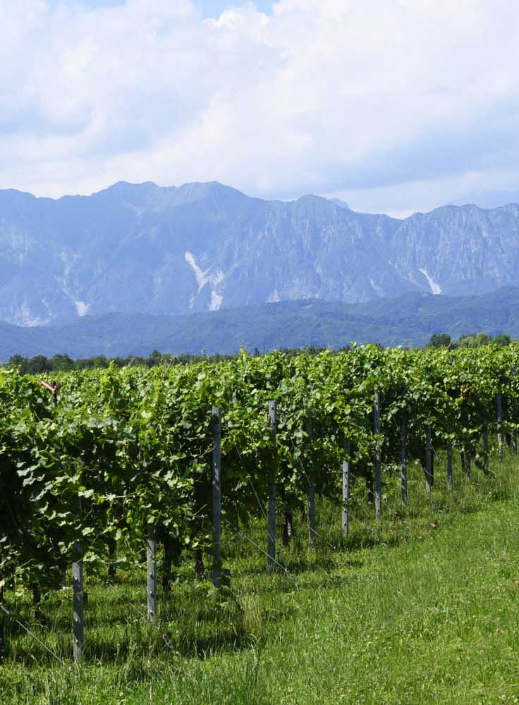 Vigne Friuli-Venezia Giulia