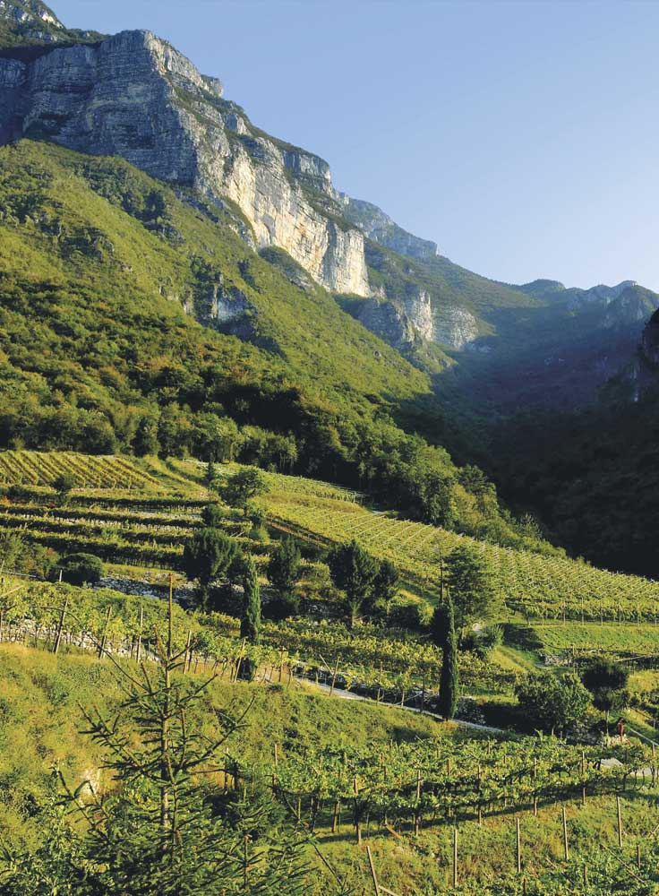 Vigne Trentino-Alto Adige