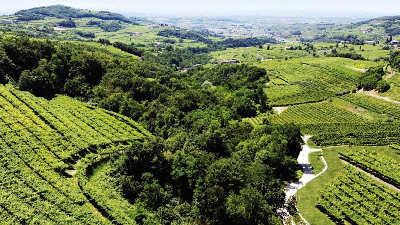 Marano di Valpolicella, vitigni, sostenibilità